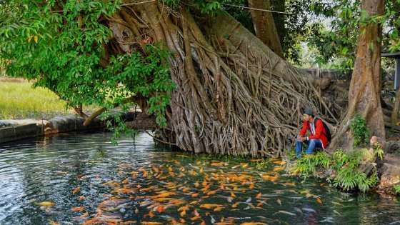 Wisata Sumber Dhuwur Ngoro